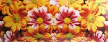 Fine Art Floral Color Photography titled -Brothers a Sisters